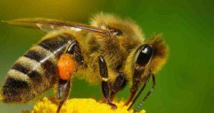 apicultura-apicolasolven